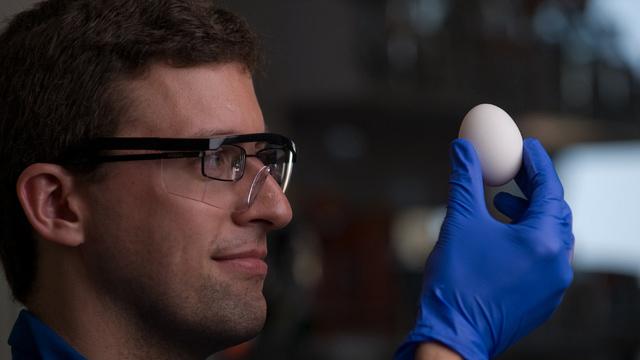 "Científicos descubren cómo ""deshervir"" huevos - Código Espagueti"