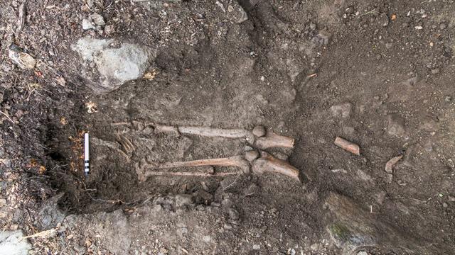 Esqueleto-Collooney