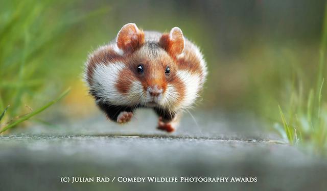 WINNER Comedy Wildlife Photography Awards