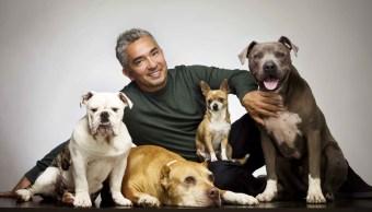 Cesar Millan con unos perros calmados
