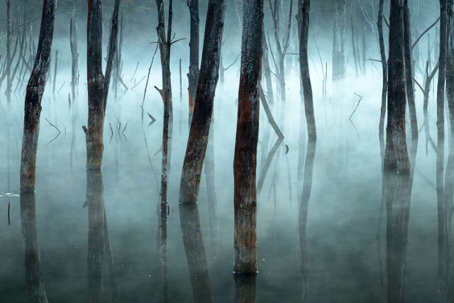 Dead trees in a natural dam, from an enchanted forest :)
