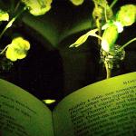 Logran crear plantas que emiten luz en el MIT
