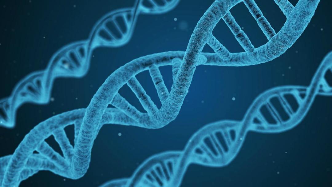 Descubren una nueva estructura escondida en el ADN humano