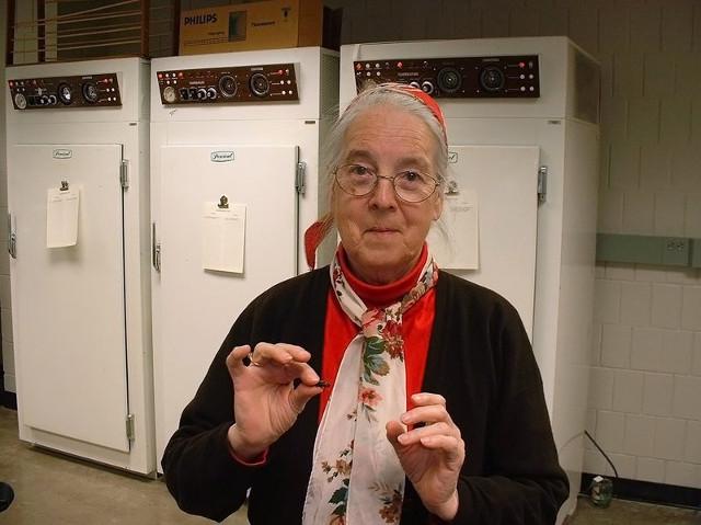 La profesora Barbara Stay sosteniendo una cucaracha escarabajo del Pacífico (Diploptera punctata)