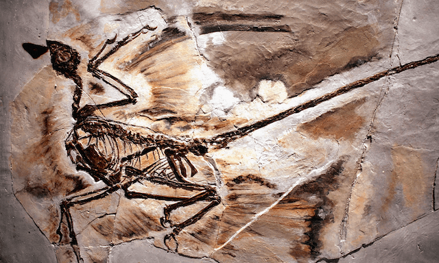 rastos de un dinosaurio con caspa