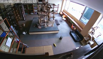 Gatos-presienten-sismo-video