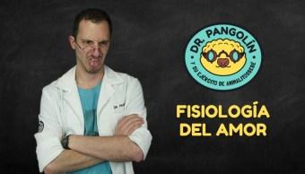 fisiología del amor - Dr. Pangolín