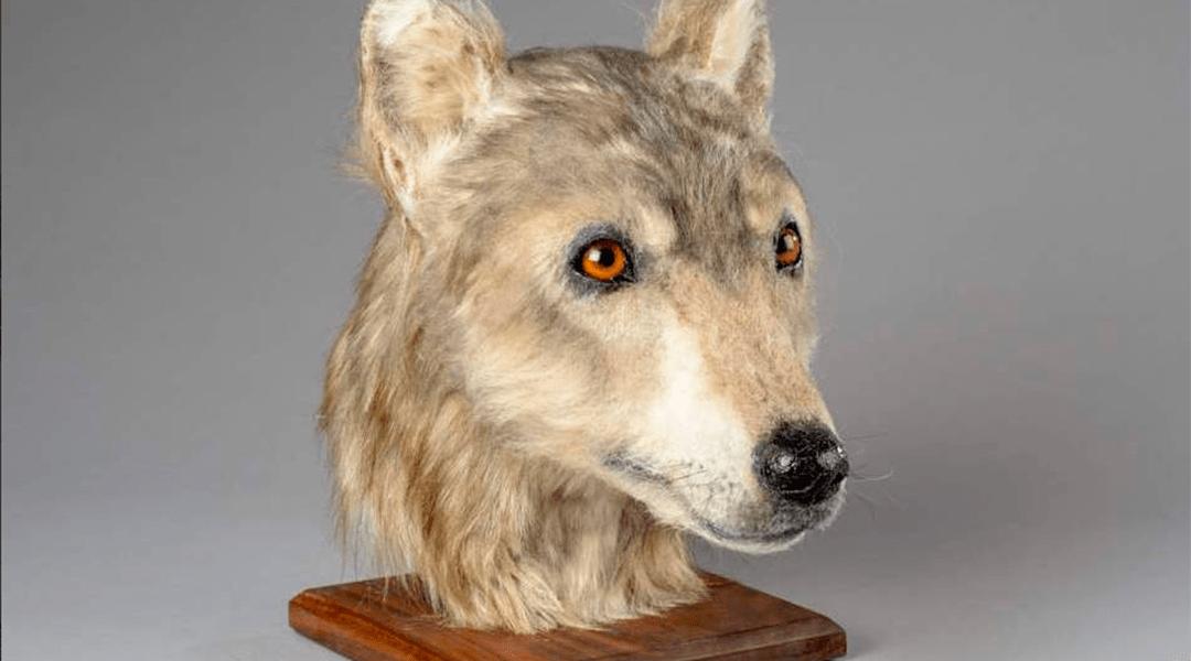 perro paleolitico Historic Environment Scotland