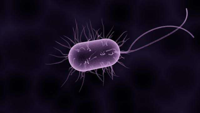bacteria-diarrea-azúcar