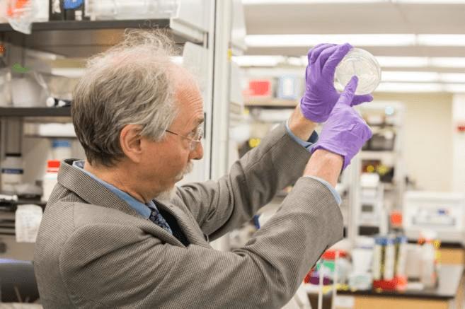 El científico Jef Boeke muestra la primera levadura con un cromosoma sintético