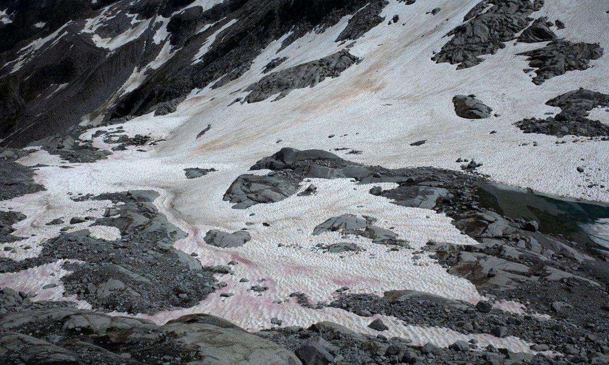 nieve rosa en los Alpes