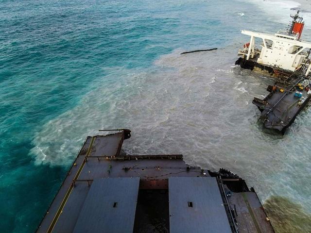Muerte Delfines Barco Japones Mauricio