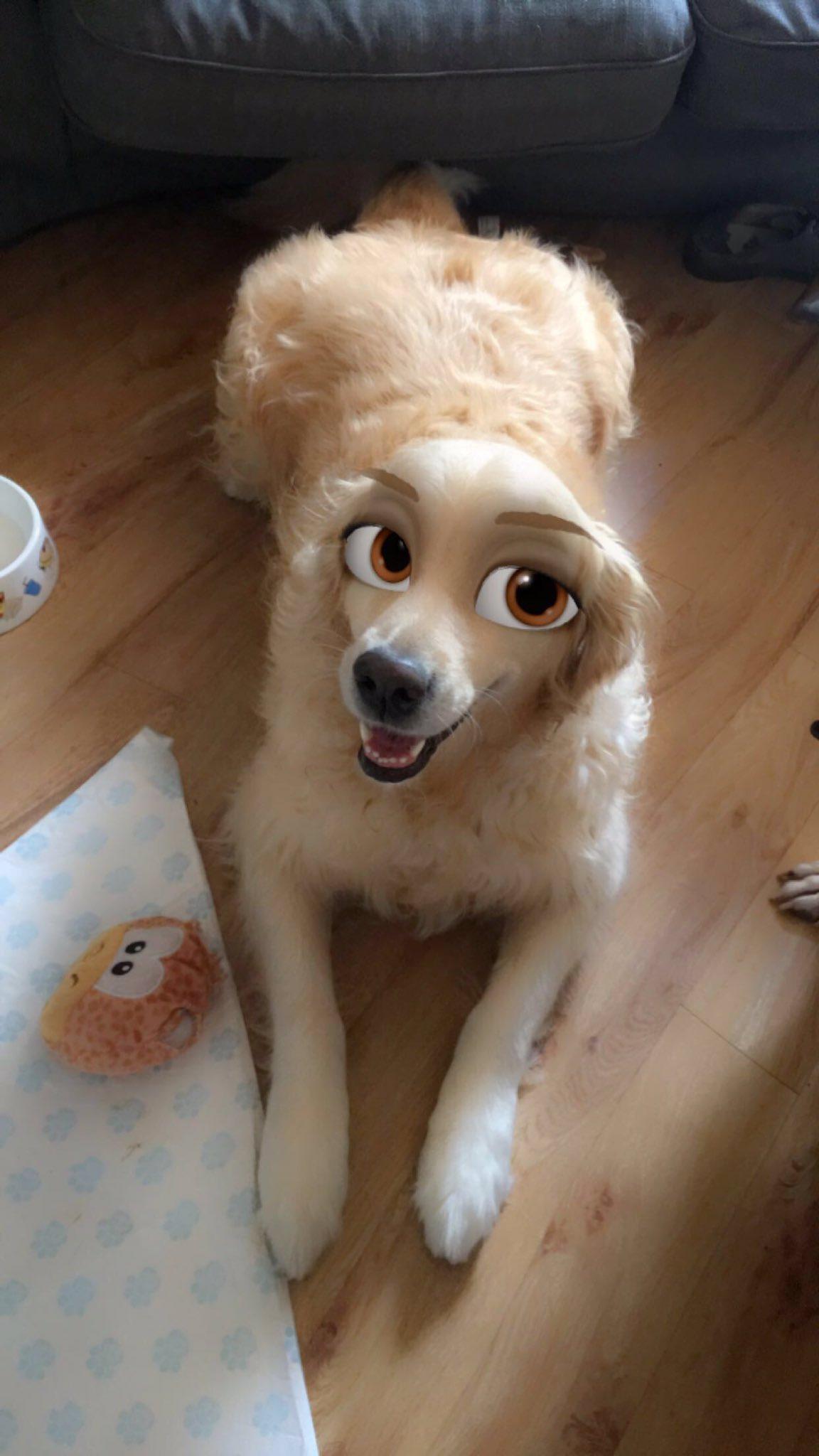Snapchat filtro perros