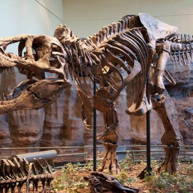 Descubren nueva especie de dinosaurio pariente del T Rex