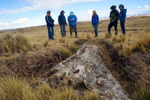 Restos Fósicles Árbol Perú