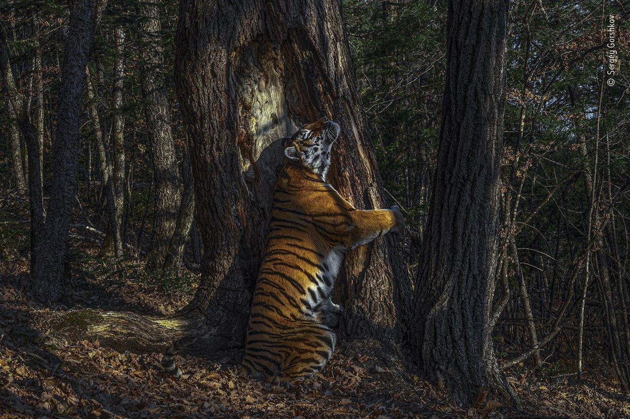 Esta es la fotografía ganadora del Wildlife Photographer of the Year 2020