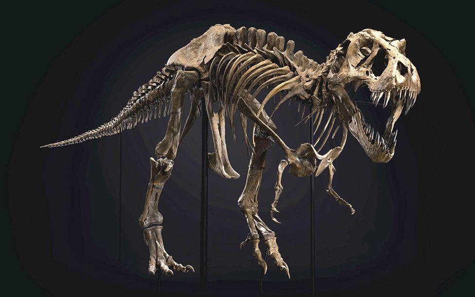 Stan, Tiranosaurio Rex