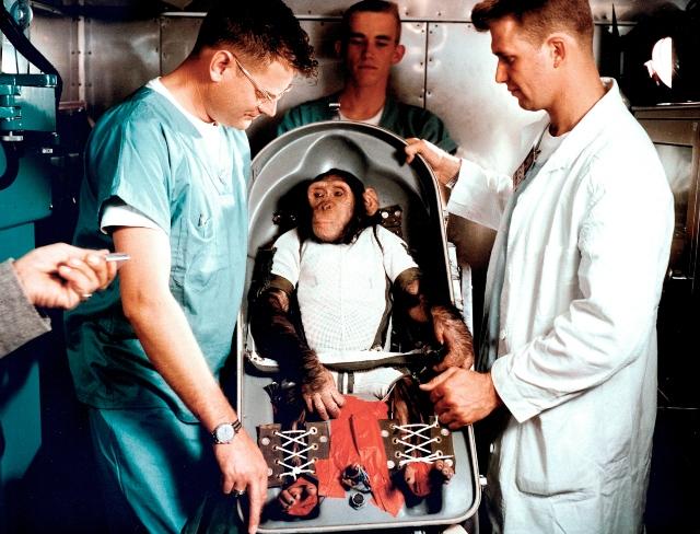 Ham fue el primer mono de la NASA en el espacio