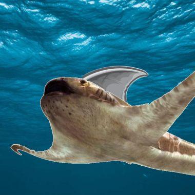 La especie de tiburón que recorrió mares mexicanos hace cientos de años (2)