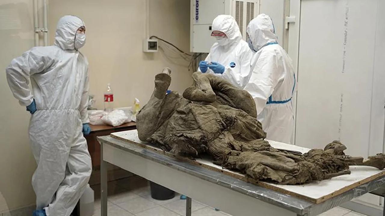 científicos rusos estudian virus prehistoricos
