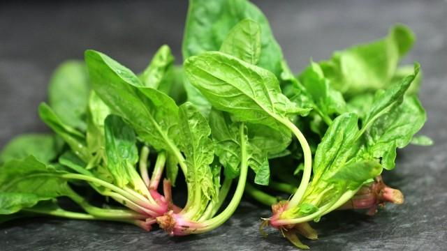 propiedades de la espinaca tipo de planta