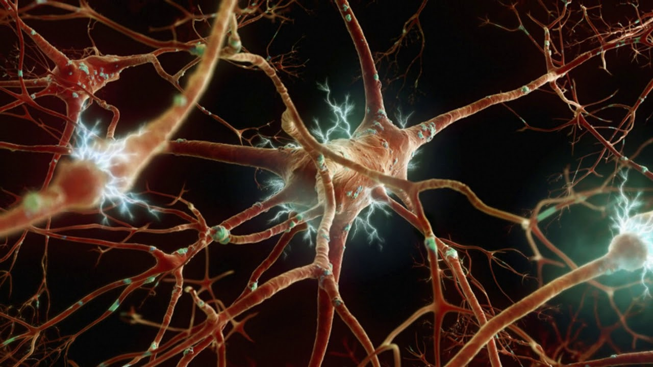 neuronas cerebro humano