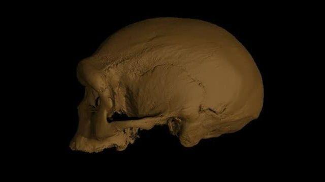 homo longi craneo humano