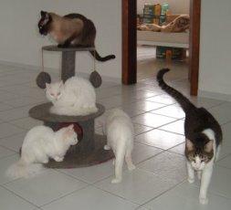 Arranhador e gatos