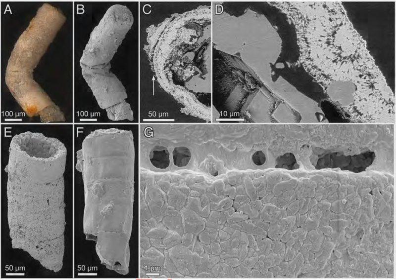 Hay características de dos tipos de algas rojas en los fósiles: Rafatazmia y Ramathallus