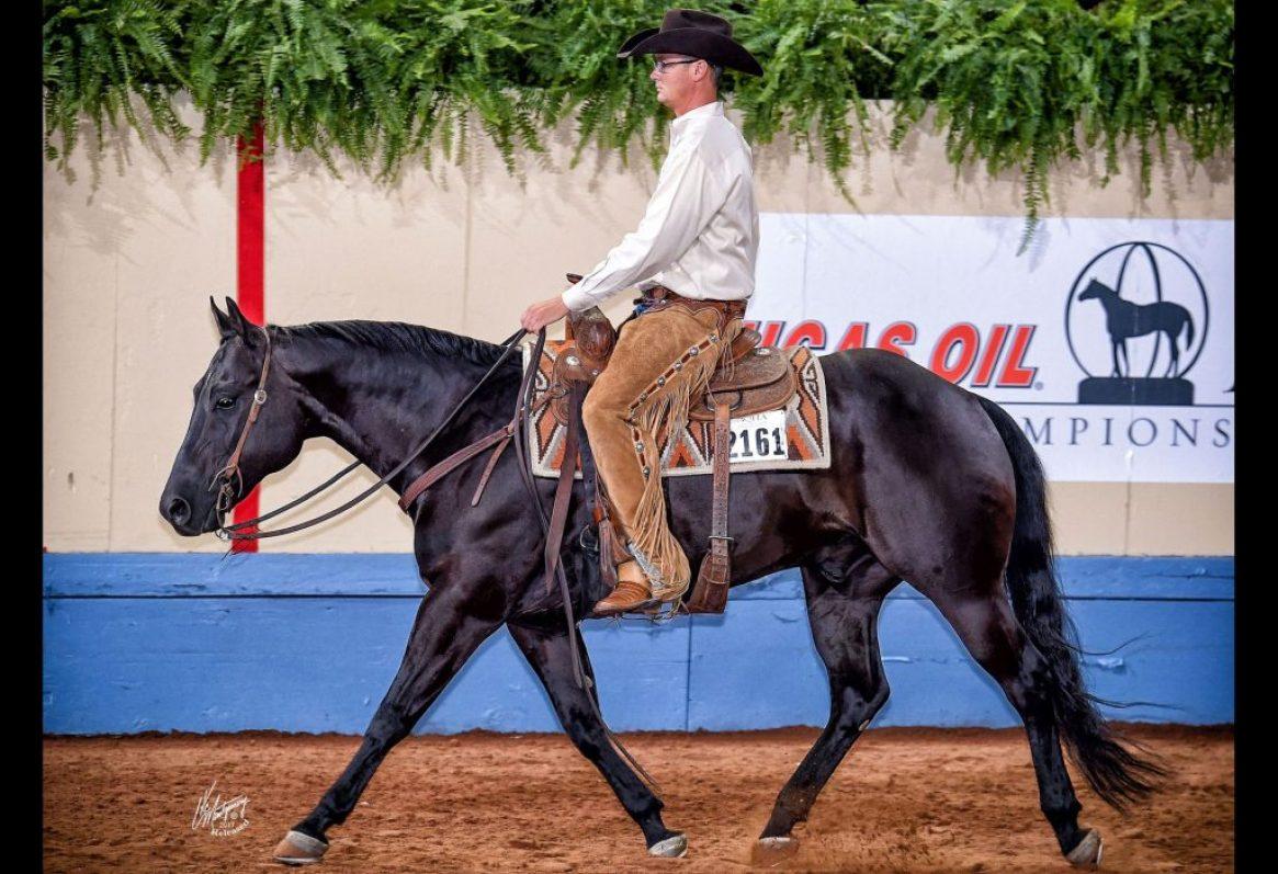codycrow-showhorses