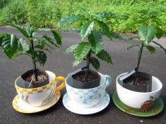 沖縄コーヒープレゼント