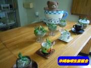 沖縄コーヒー水耕