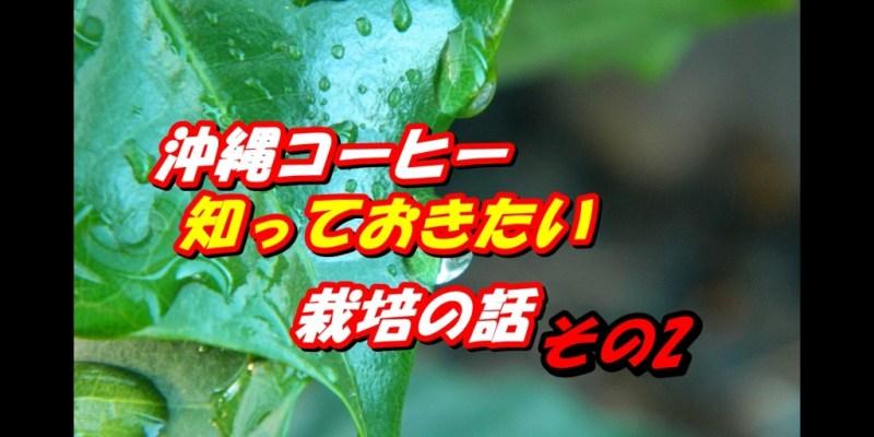沖縄コーヒー栽培の話2