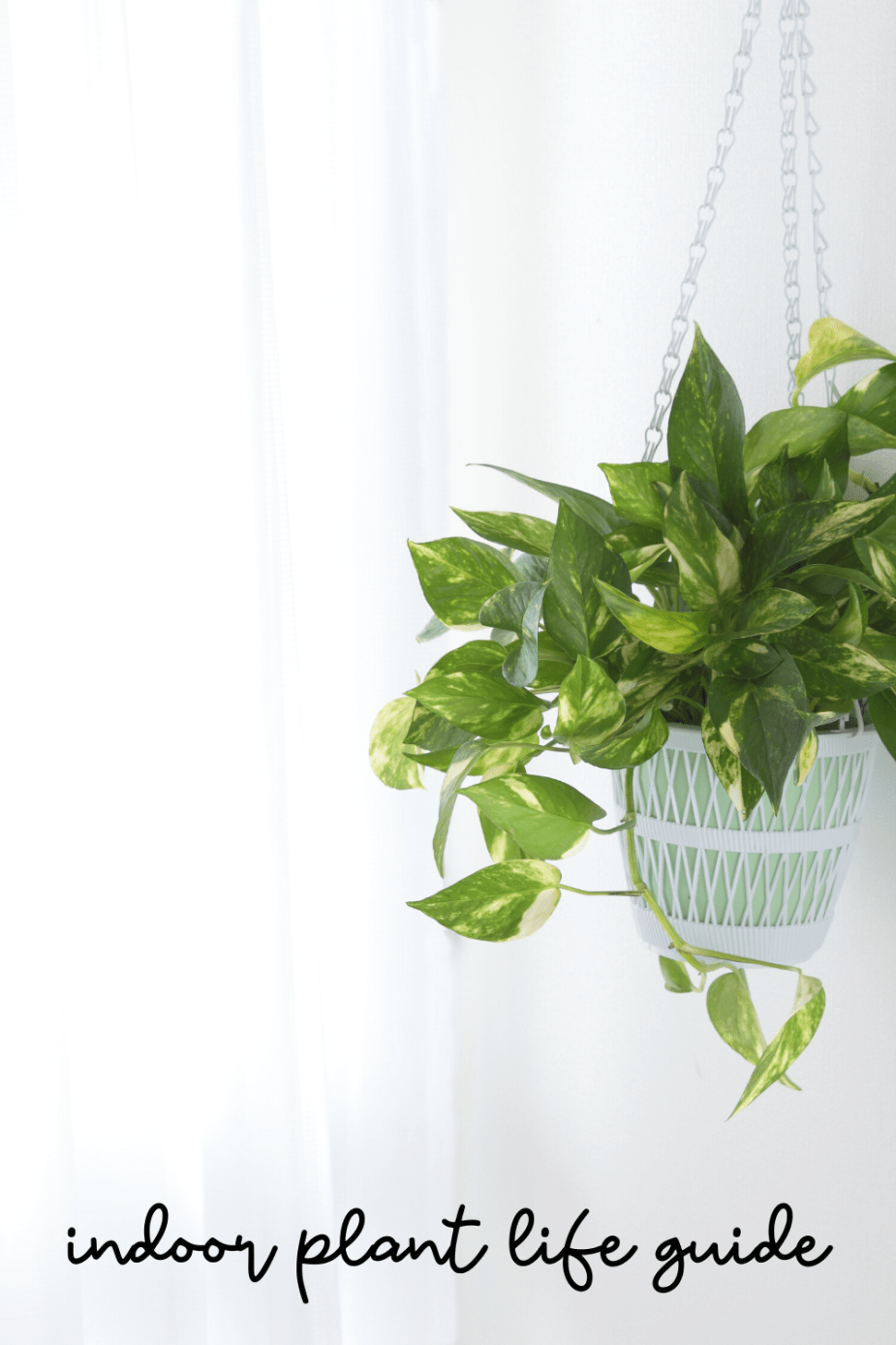 indoor plant life guide