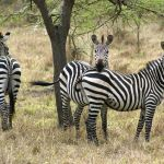 Top 5 wildlife experiences for World Wildlife Day