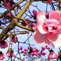 my, oh my, magnolia...