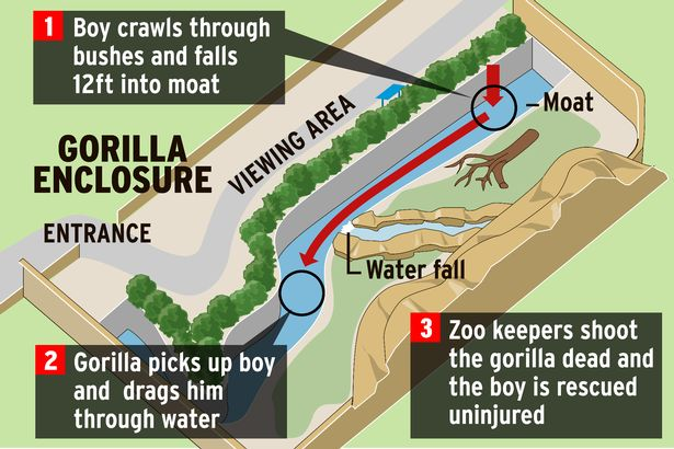 Cincinnati-Zoo-Gorilla-enclosure-graphic.jpg