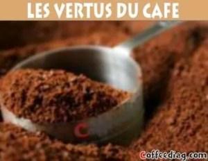 les vertus du café sur le corps plante medecinale