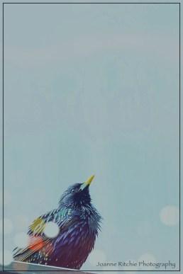 Pretty Bird 1-4-1