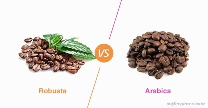 Robusta vs. Arabica: Caffeine Content. Taste. Consumption – CoffeeGearX