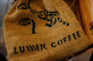 Le kopi luwak : son histoire, sa rareté et son manque d'éthique