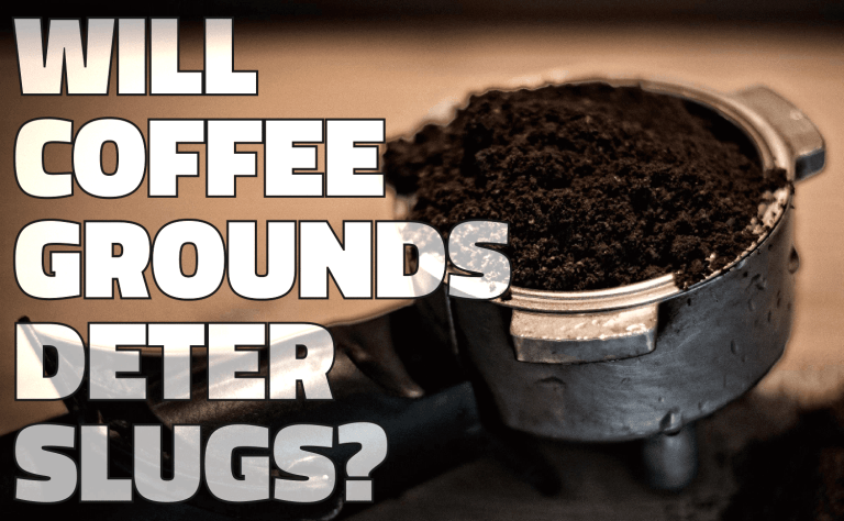 Will Coffee Grounds Deter Slugs?