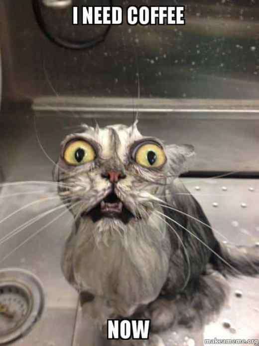 wet cat coffee