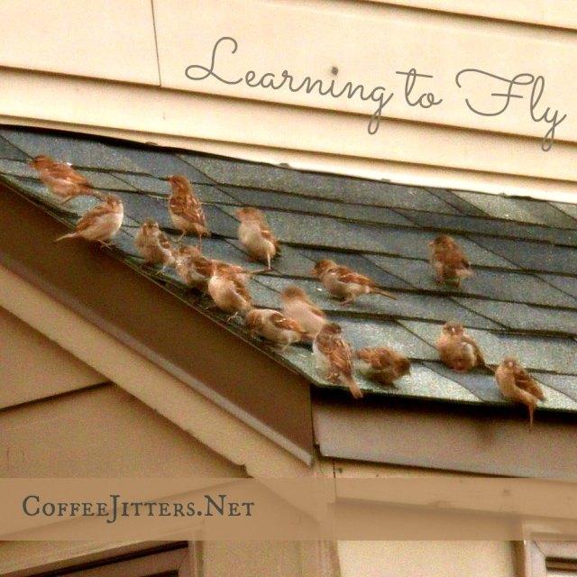 birds learning to fly - CoffeeJitters.Net
