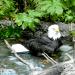 eagle bird bath