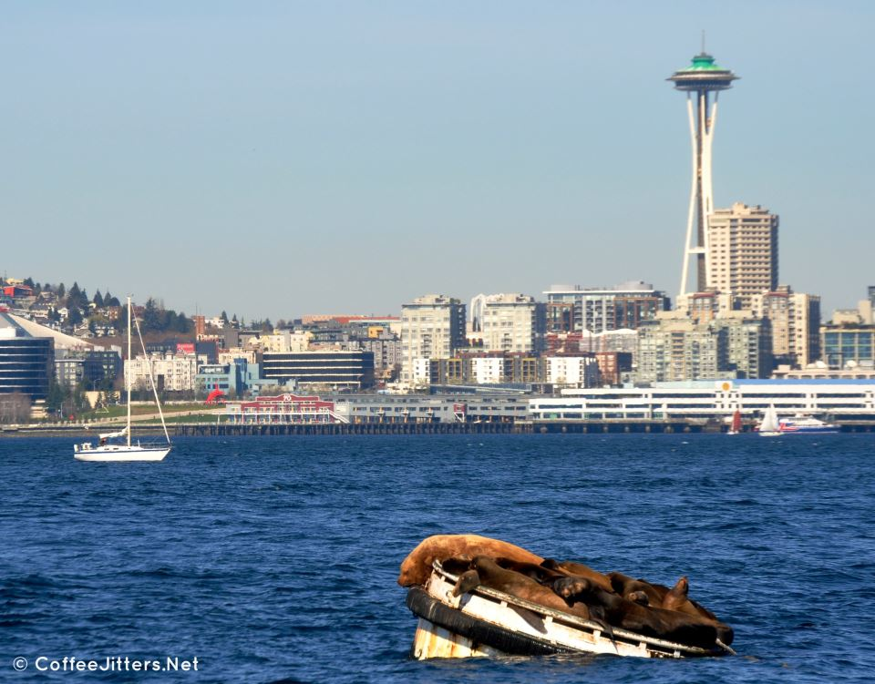 Sea lions sunning in Seattle