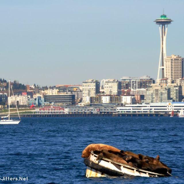 sea lions in seattle