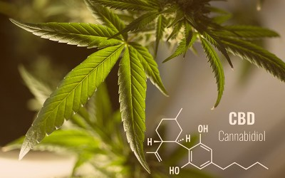 What is CBD, can it make you high?