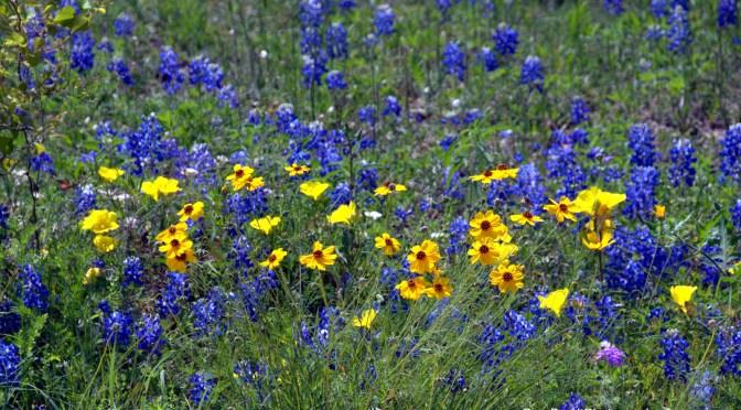 Hunting Spring Wildflowers In Texas
