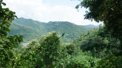 Jungle view
